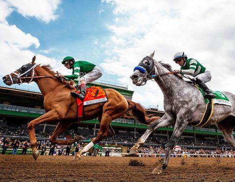 Horse, Jockey, Horse racing, Rein, Bridle, Animal sports, Halter, Race track, Sport venue, Saddle,