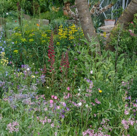 The Resilience Garden designed by Sarah Eberle and built byCrocus
