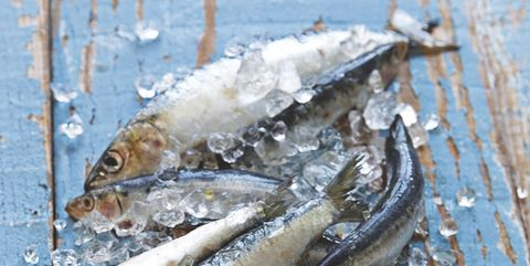 Fish, Sardine, Fish, Herring, Oily fish, Forage fish, Anchovy (food), Seafood, Fish products, Pacific saury,