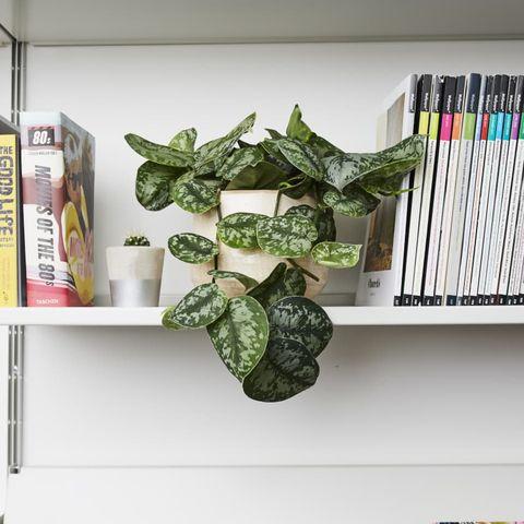 Shelf, Shelving, Green, Plant, Bookcase, Room, Furniture, Interior design, Paper,