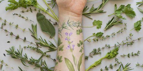 Hand, Plant, Leaf, Finger, Botany, Arm, Flower, Herb, Herbal, Parsley,