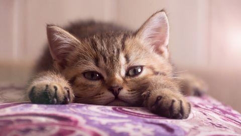 Katten met een mensenbaan carrière