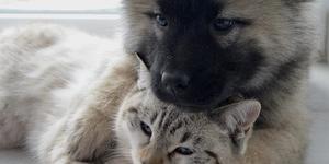 hond-kat