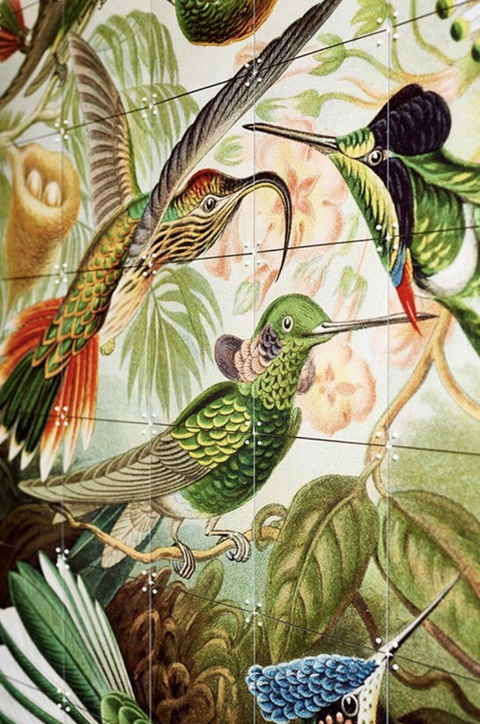 Bird, Botany, Hummingbird, Plant, Pattern, Illustration, Mural, Nepenthes, Anthurium,