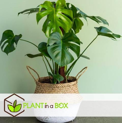 mooie planten voor in huis