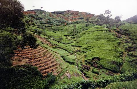 Vegetation, Terrace, Natural landscape, Highland, Plant community, Landscape, Plantation, Hill station, Rural area, Hill,