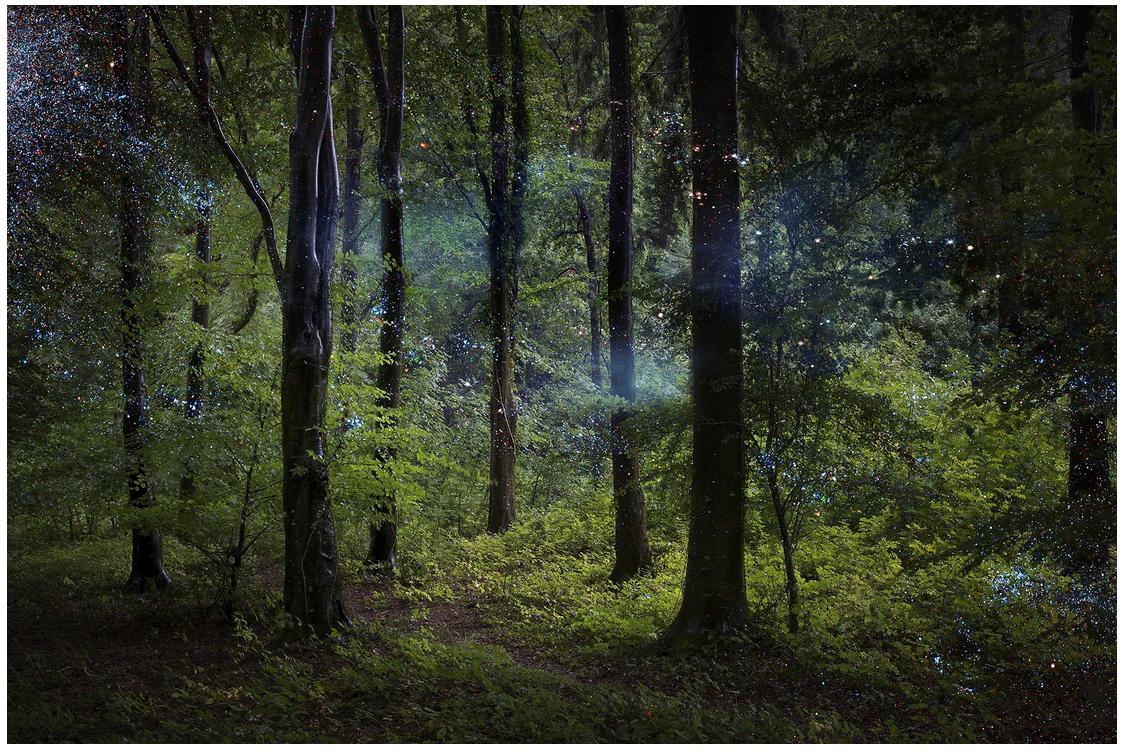 La migliore lezione di politica ce la dà una foresta
