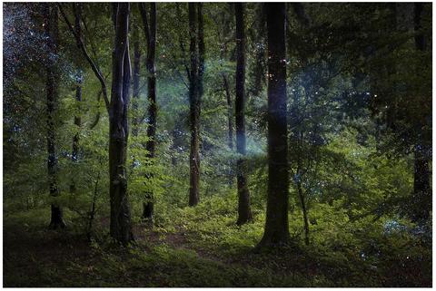 Foresta e alberi