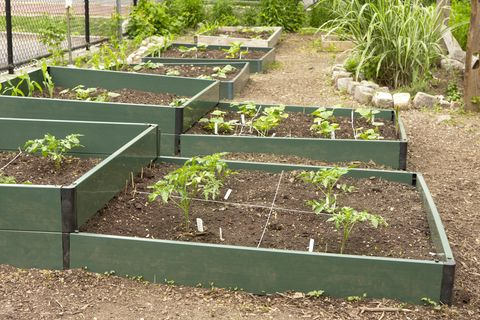 Vegetable Gardening For Beginners Small Vegetable Garden Ideas
