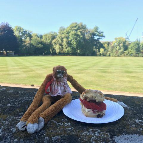 buckingham palace monkey toy scone staff return