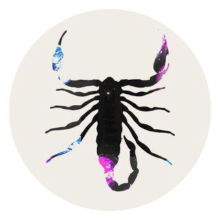 invertebrate, scorpion, decapoda, seafood, arthropod, lobster, illustration, crustacean, american lobster, crab,