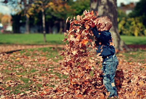 People in nature, Leaf, Autumn, Tree, Plant, Soil,
