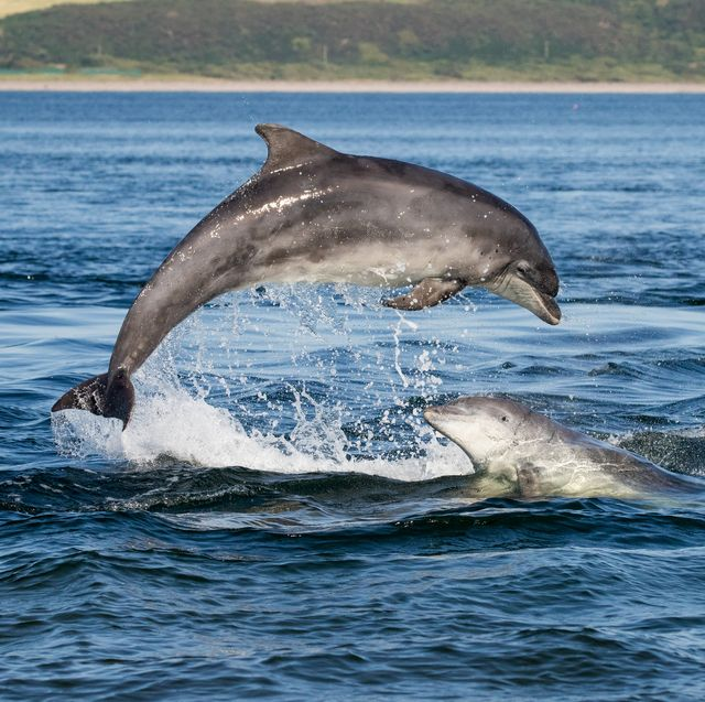 dolphins have similar personality traits to humans, a new study has found