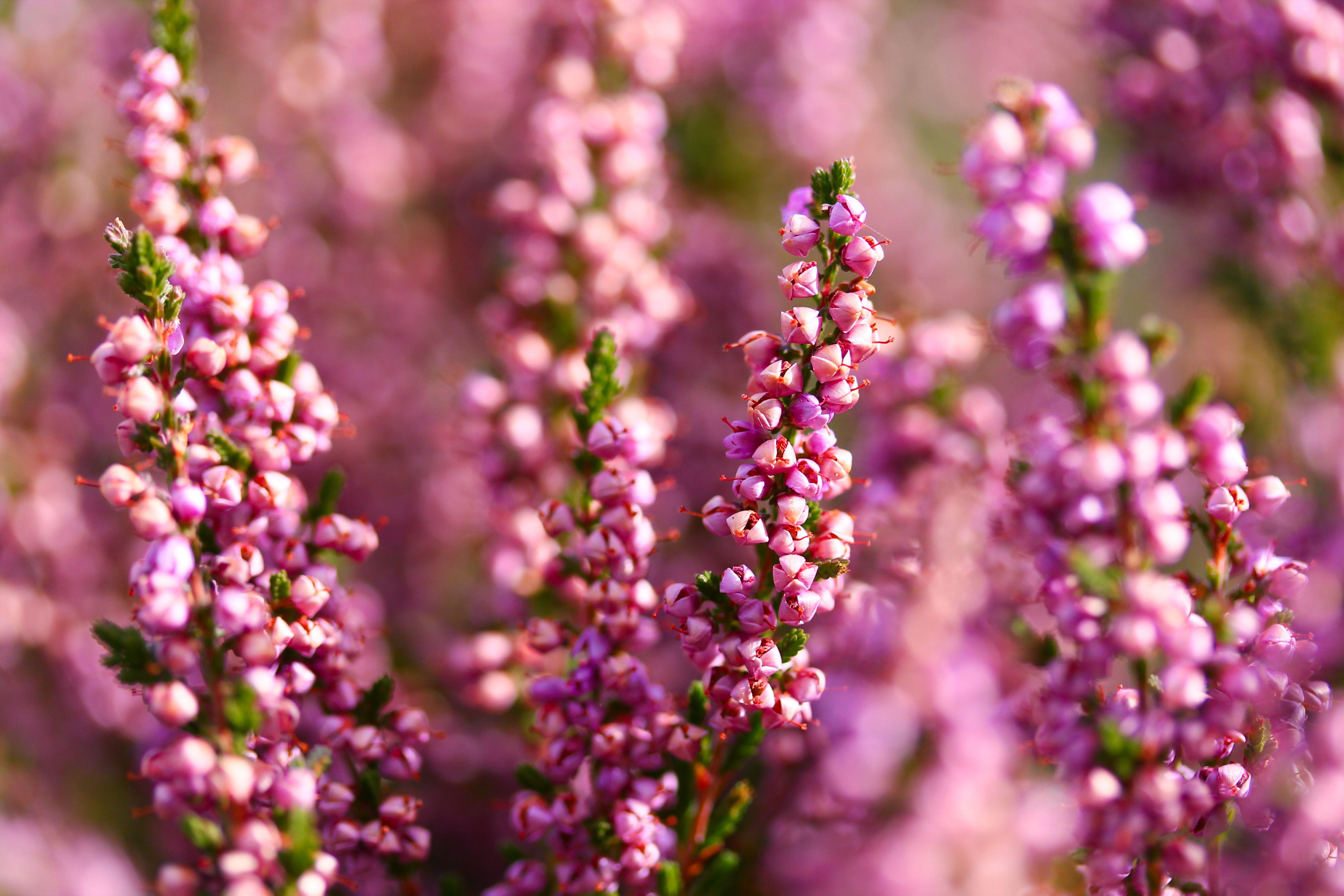 7 Best Winter Flowering Plants For Your Garden