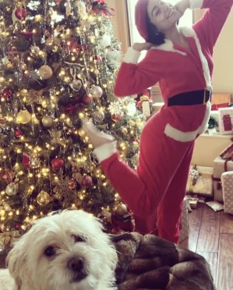 Dog, Christmas, Canidae, Dog breed, Christmas tree, Schnoodle, Cockapoo, Companion dog, Christmas eve, Puppy love,