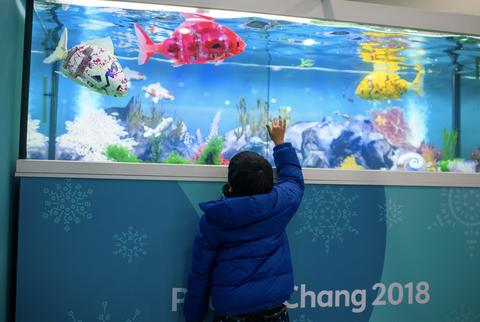 Aquarium, Freshwater aquarium, Marine biology, Organism, Fish, Aquarium lighting, World, Screen, Media, Underwater,