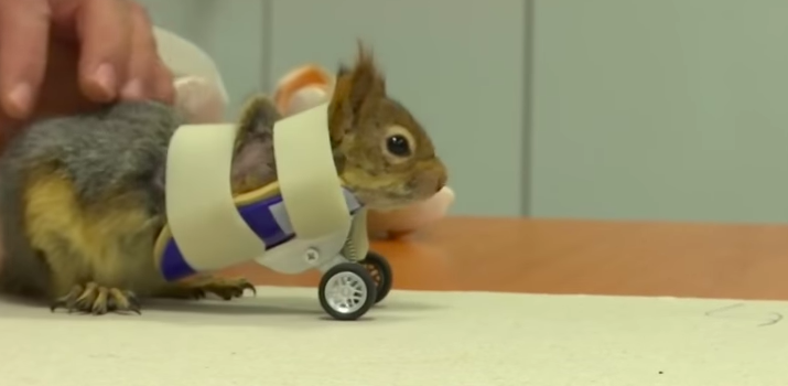 disabled squirrel bionic