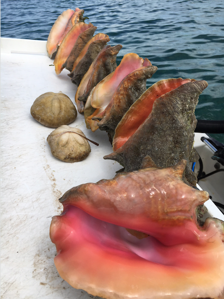 Conch, Conch, Cuisine, Seafood, Snails and slugs, Food, Sea snail,