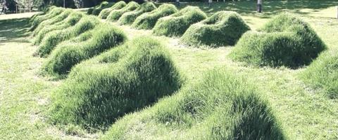 Grass, Vegetation, Shrub, Natural landscape, Plant, Plant community, Grass family, Grassland, Tree, Landscape,