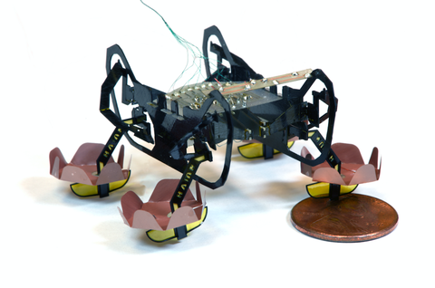 harvard robotic cockroach