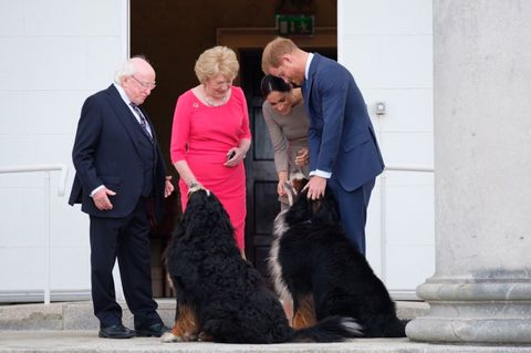 Check out Prince Harry and Meghan Markle bonding with two extremely large dogs