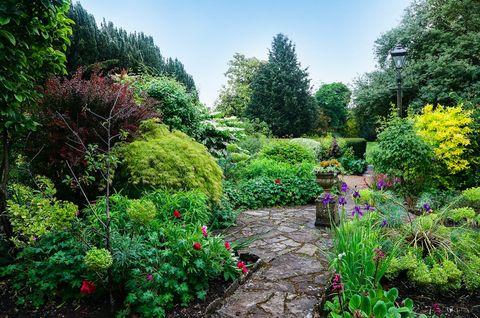 Vegetation, Plant, Shrub, Garden, Plant community, Landscape, Flower, Botany, Groundcover, Yard,