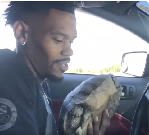 Olympic Sprinter David Verburg Stops Traffic to Rescue a Tortoise