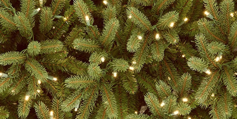 Image Real Christmas Trees Have
