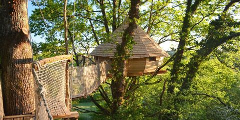 Tree, Woody plant, Plant, Tree house, House, Building, Trunk, Forest, Jungle,