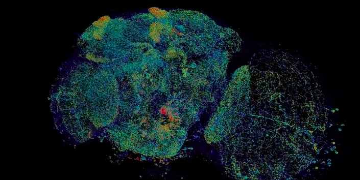 Scientists Mapped Entire Brains at Nanoscale For This Psychadelic Visualization