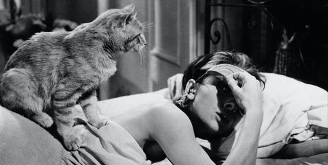 Felidae, Black-and-white, Interaction, Human, Cat, Photography, Monochrome, Hug, Birth, Love,