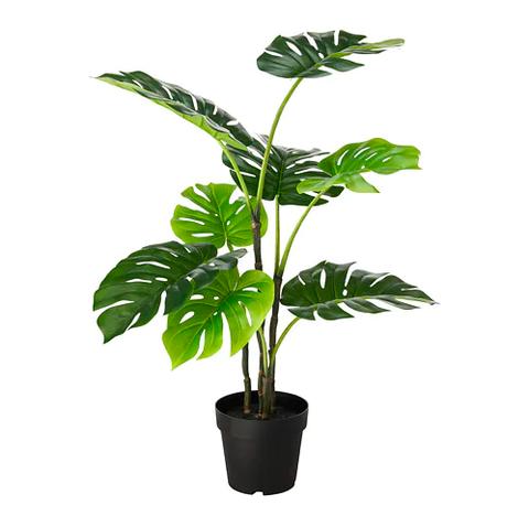 Flower, Flowering plant, Flowerpot, Plant, Leaf, Houseplant, Tree, Plant stem, Anthurium, Arum family,