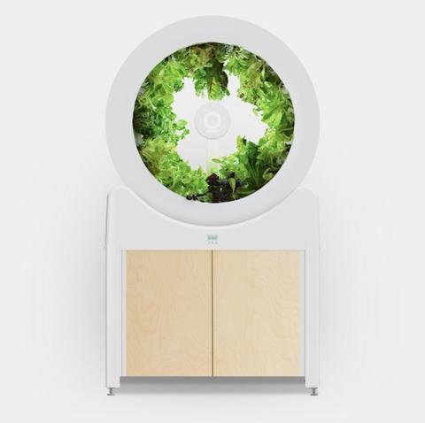 Green, Tree, Leaf, Plant, Grass, Architecture, Landscape, World, Window,