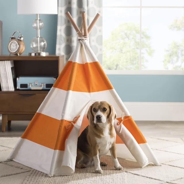 Dog, Canidae, Dog breed, Table, Room, Carnivore, Companion dog, Beagle, Furniture, Floor,