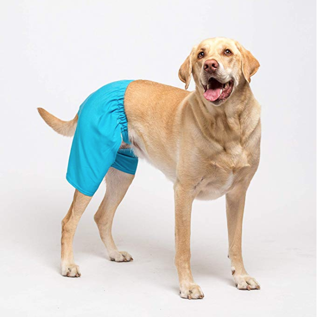 You Can Finally Match Your Swim Trunks With Your Dog