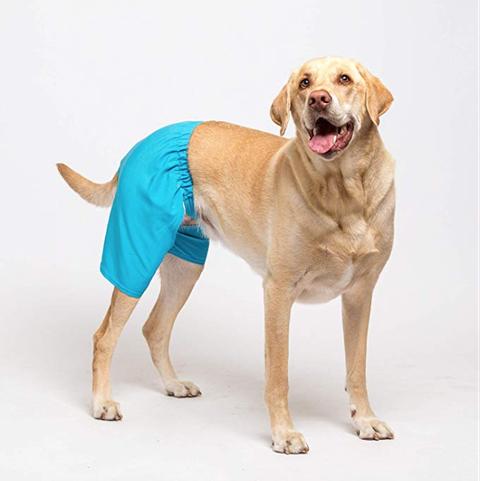 Dog, Canidae, Dog breed, Carnivore, Sporting Group, Labrador retriever, Outerwear, Dog clothes, Retriever, Companion dog,