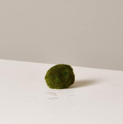 Green, Still life photography, Plant,