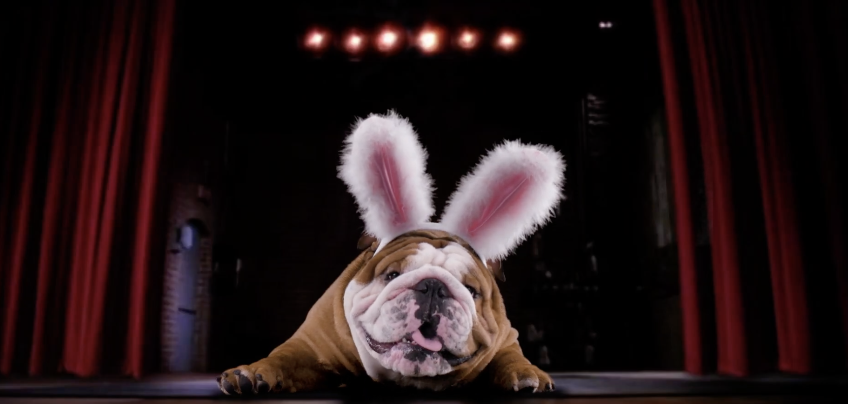 [UPDATE] Henri The English Bulldog Is Cadbury's Newest Easter 'Bunny,' And The Commercial Is SO Cute