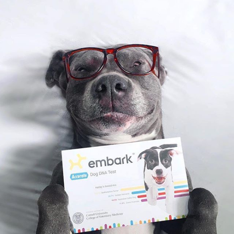 what are dog dna tests