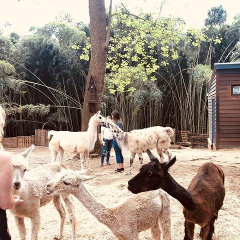 Atlanta Georgia Airbnb treehouse llama alpaca farm