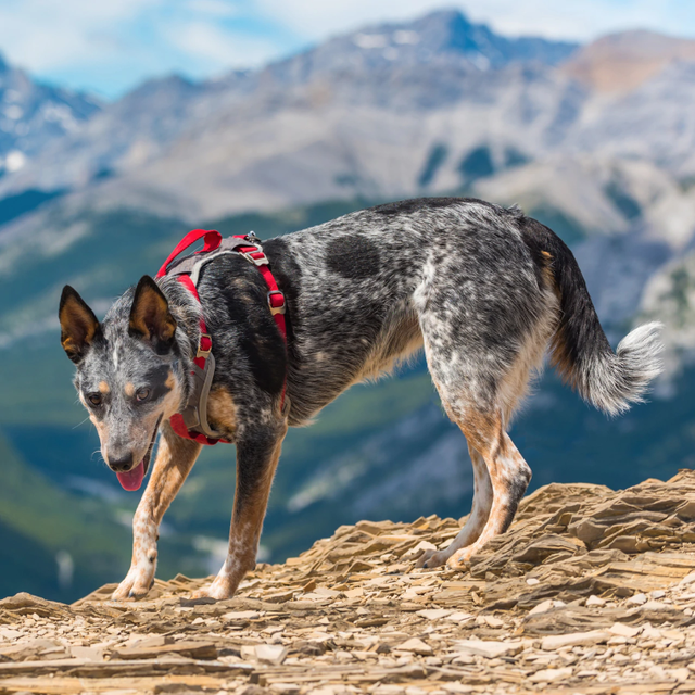 15 Best Dog Harnesses for an Easier Walk