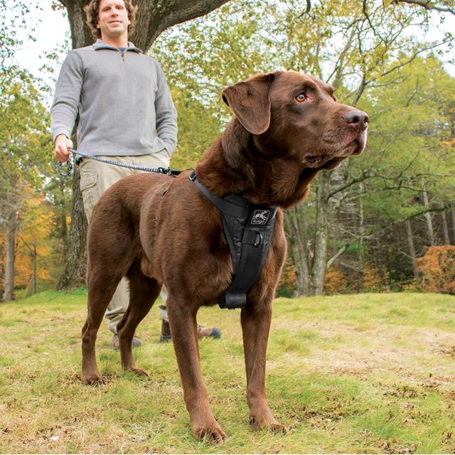 best dog harnesses - kurgo walking harness