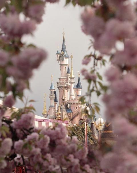 Flower, Pink, Lilac, Spring, Lavender, Plant, Blossom, Tree, Cherry blossom, Branch,