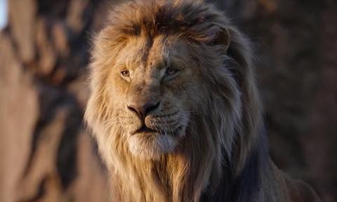 Mammal, Lion, Vertebrate, Hair, Wildlife, Masai lion, Felidae, Terrestrial animal, Big cats, Mane,