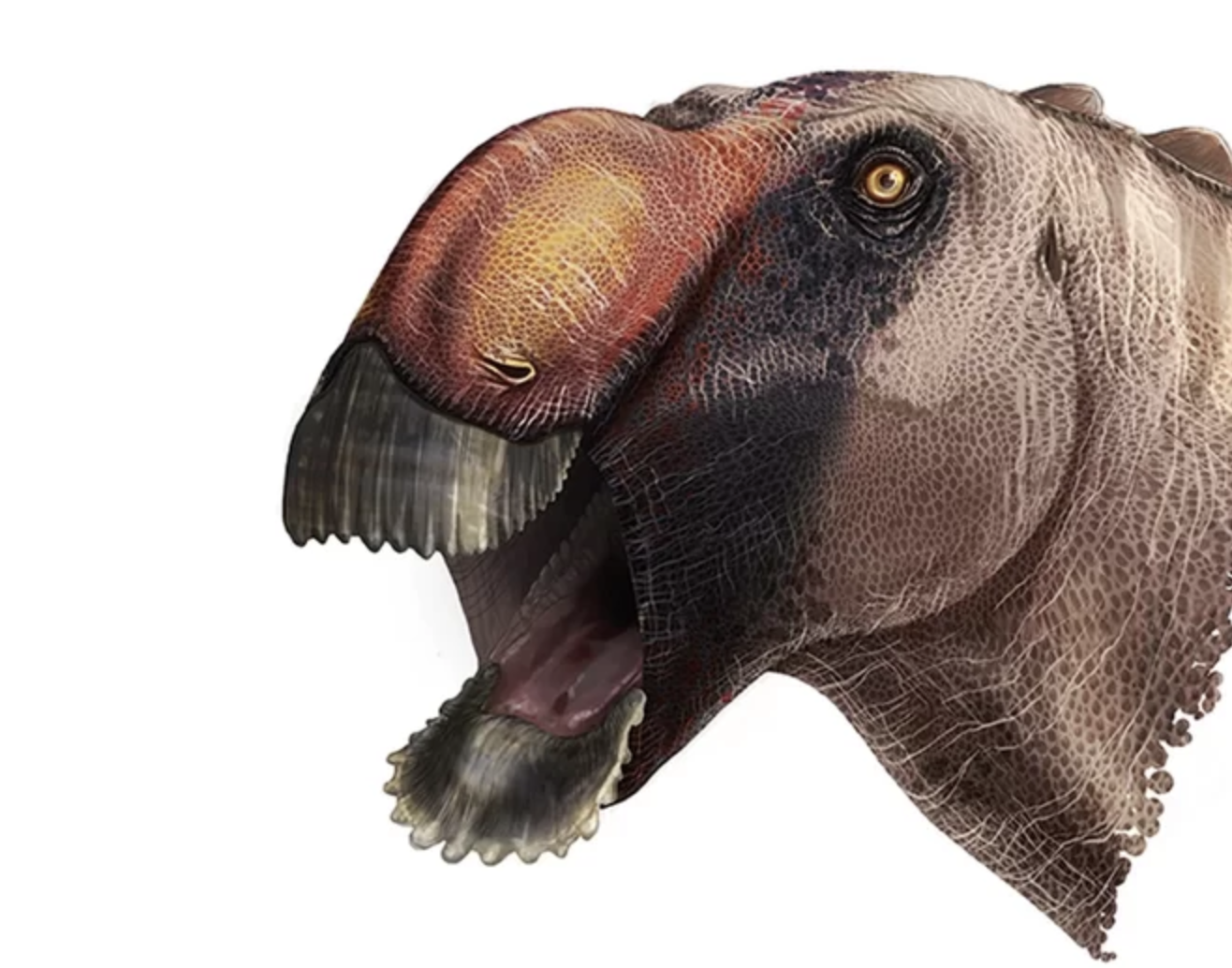 This Duck-Billed Dino Is One Weird-Looking Creature