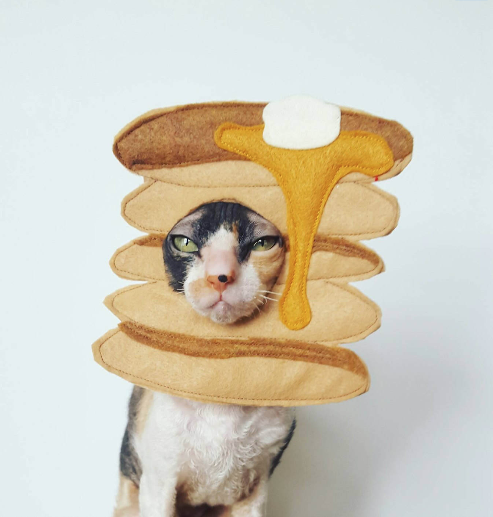 I Don't Care That It's Not Halloween Yet, You Literally Need This Pancake Costume For Your Cat