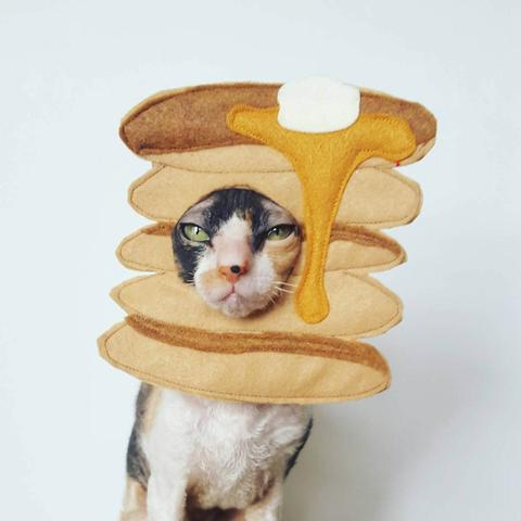 pet food halloween costume