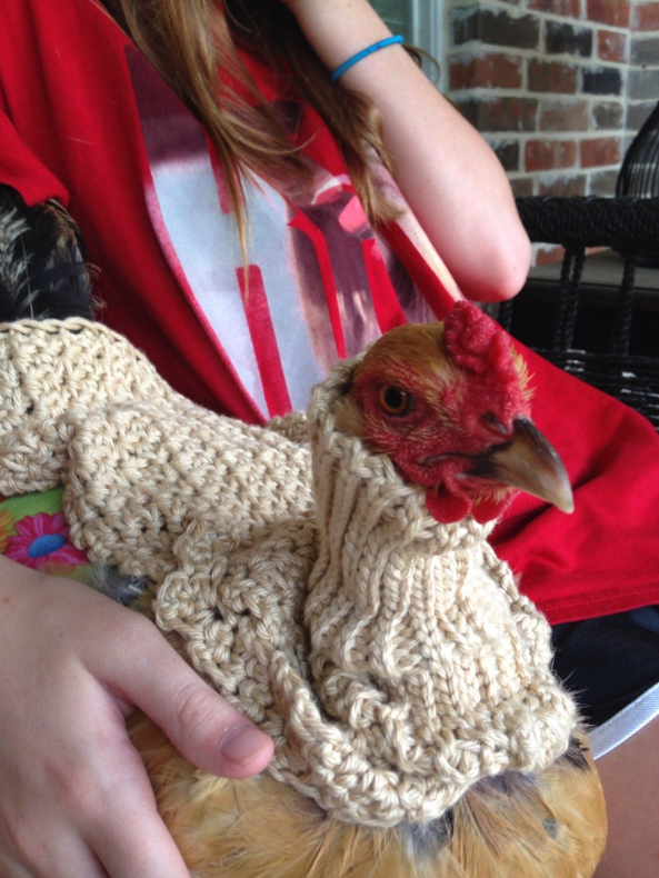 Um, You Can Buy a Chunky Turtleneck Sweater For Your Pet Chicken To Snuggle Up In