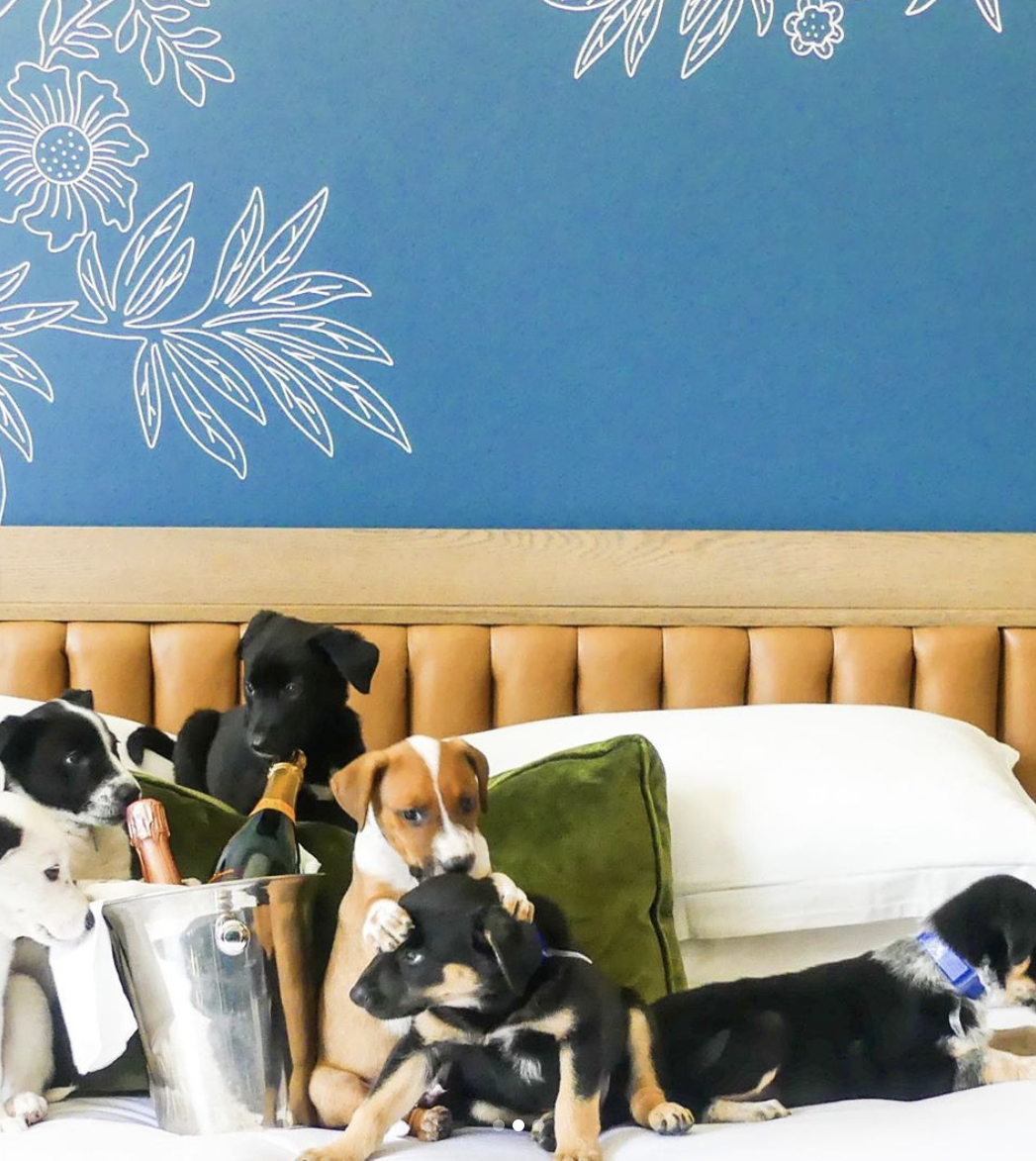 This Denver Hotel Is Offering A Puppies & Prosecco Pack To