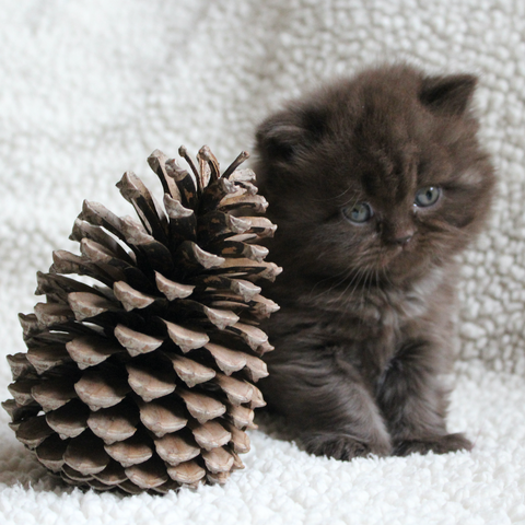 How to Keep Your Cat Out and Away from the Christmas Tree ...